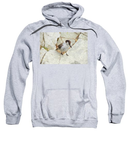 Camprobber - The Gray Jay Sweatshirt