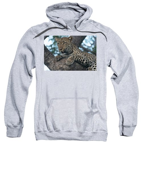 A Focused Leopard Sweatshirt
