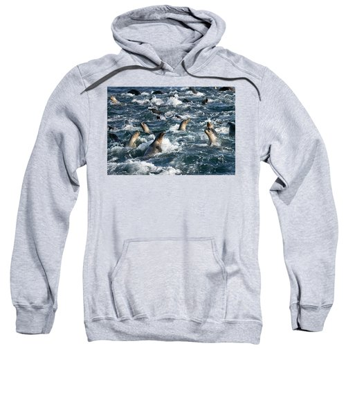 A Raft Of Sea Lions Sweatshirt