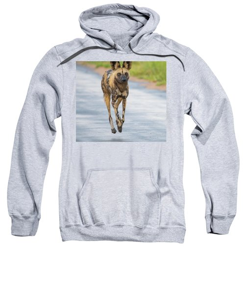 African Wild Dog Bouncing Sweatshirt