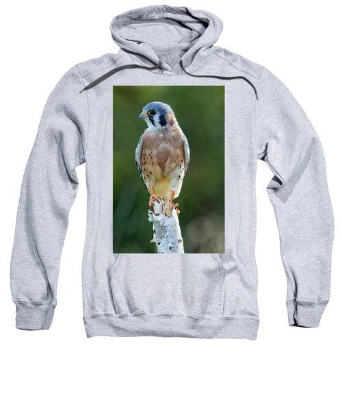 American Kestrel 9251502 Sweatshirt