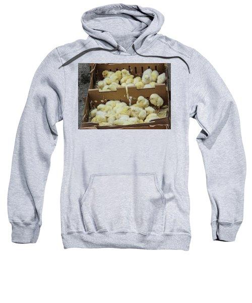 Baby Chicks  Sweatshirt