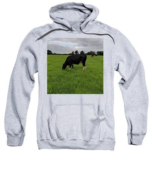 Beautiful Dairy Heifer Sweatshirt