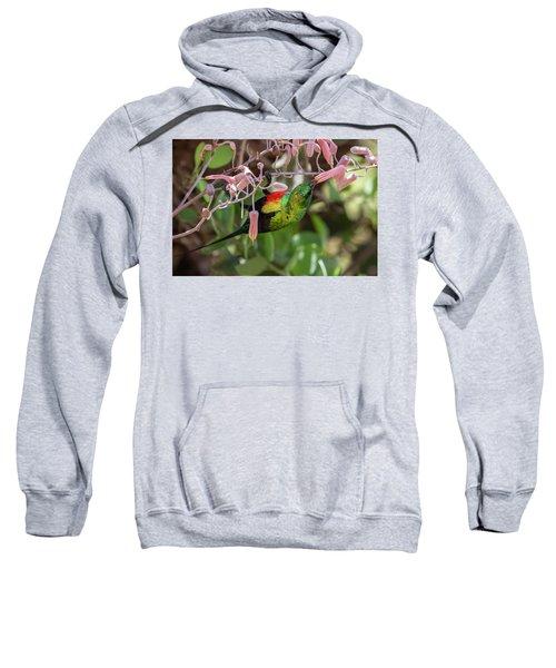 Beautiful Sunbird Sweatshirt
