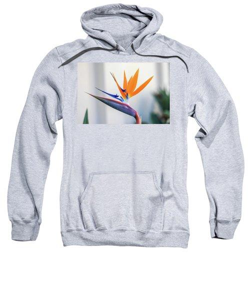 Beauty In Paradise Sweatshirt