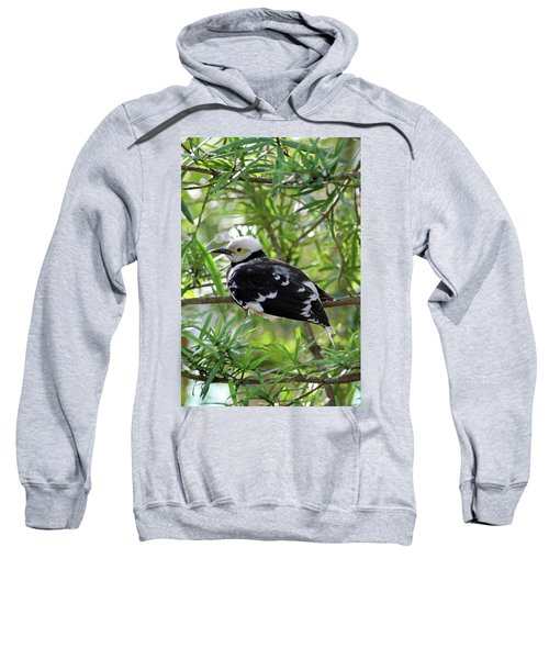 Black Collared Beauty Sweatshirt