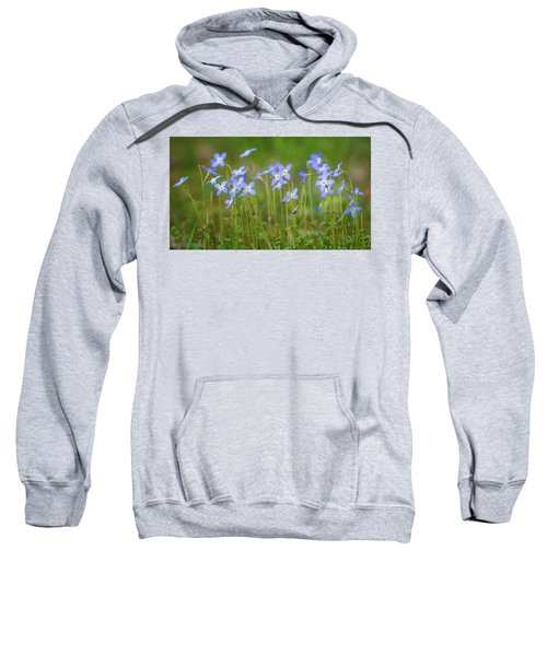 Blue Wild Flowers Bluets Sweatshirt