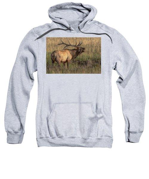 Bugling Bull Elk 7777 Sweatshirt