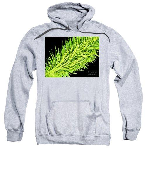 C016/0065 Sweatshirt
