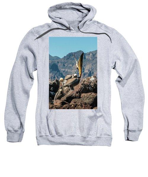 California Brown Pelicans In Ilsa Danzante Harbor Sweatshirt