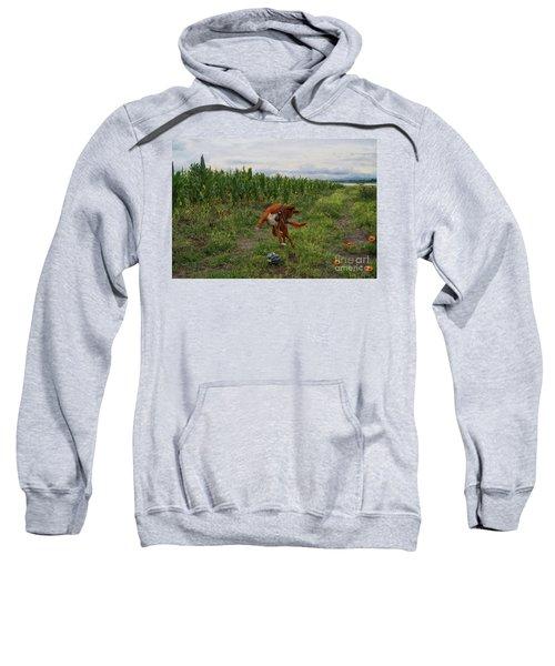 Canelo And The Watermelon Sweatshirt