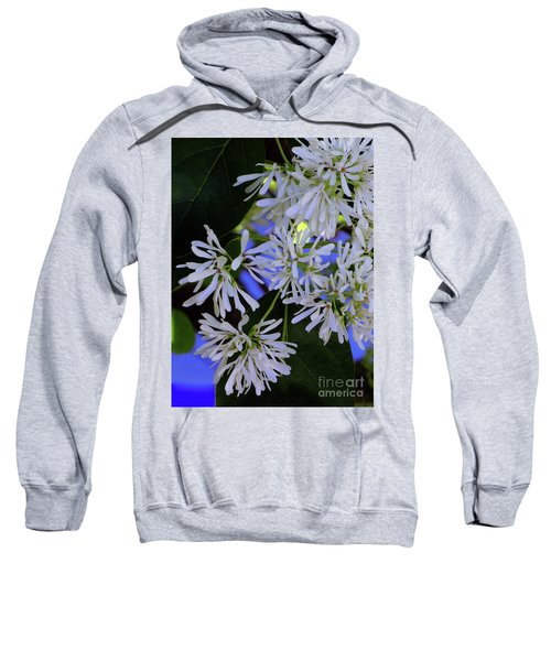 Carly's Tree - The Delicate Grow Strong Sweatshirt