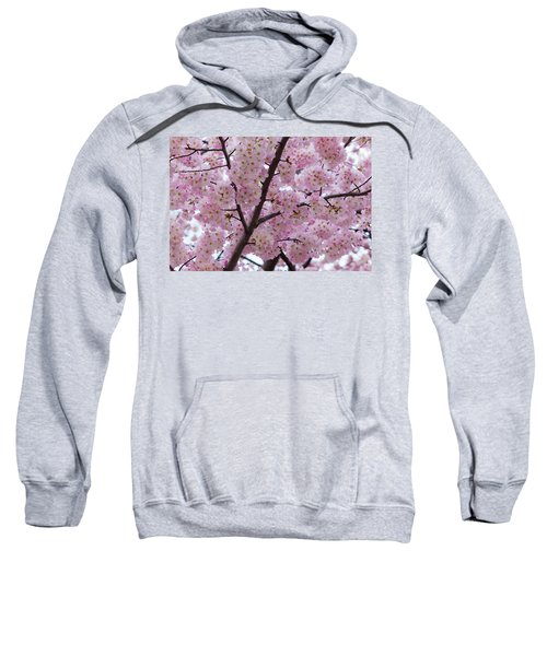 Cherry Blossoms 8611 Sweatshirt