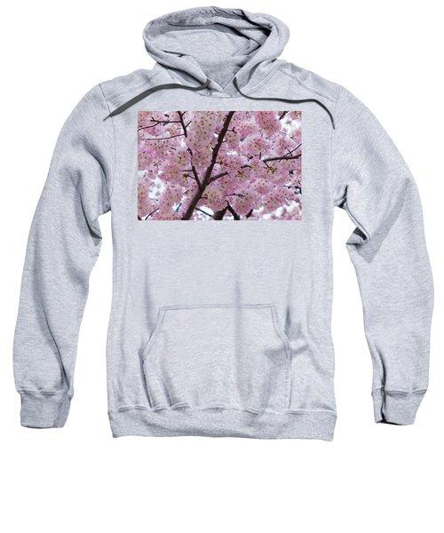 Cherry Blossoms 8611 Sweatshirt