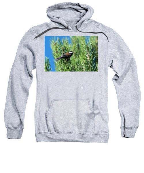 Chestnut-backed Chickadee Sweatshirt