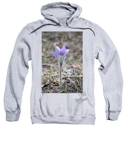 Crocus Detail Sweatshirt