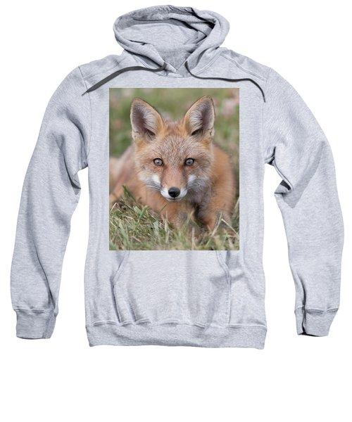 Curiosity And Trust Sweatshirt