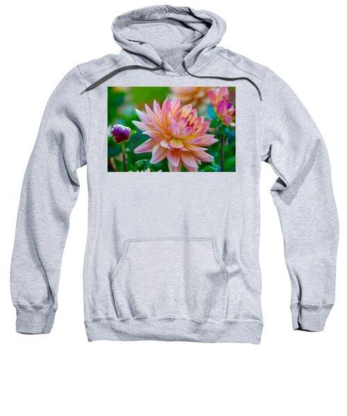 Dahlia Splendor Sweatshirt