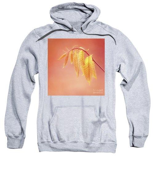 Delightful Baby Chestnut Leaves Sweatshirt