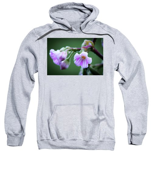 Dewy Dogbane #1 Sweatshirt