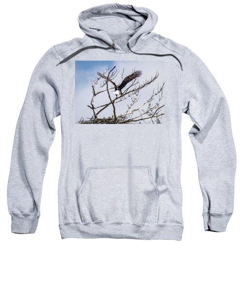Eagle Mom And Brood Sweatshirt
