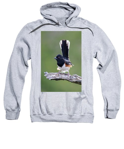 Eastern Towhee 50413 Sweatshirt