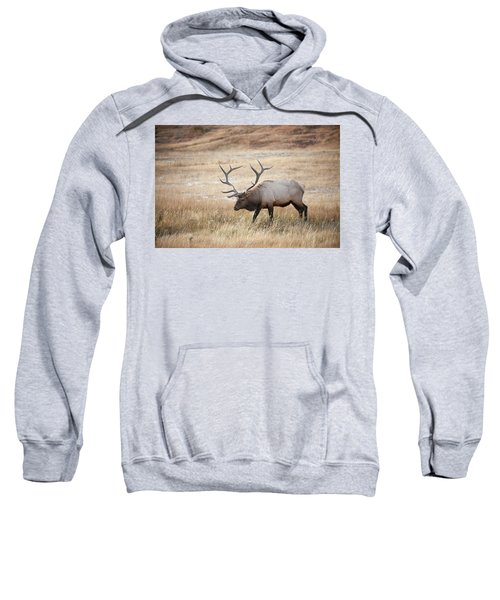 Elk In Yellowstone National Park Sweatshirt