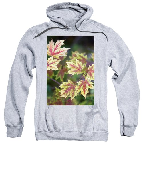 Fall Red And Yellow Leaves 10081501 Sweatshirt