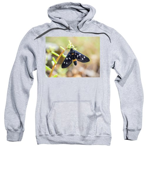 Fegea - Amata Phegea -black Insect With White Spots And Yellow Details Sweatshirt