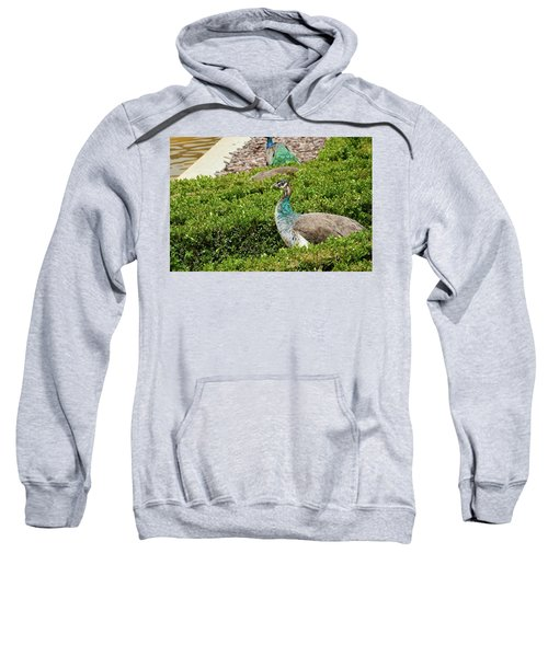Female Peafowl At The Gardens Of Cecilio Rodriguez In Madrid, Spain Sweatshirt
