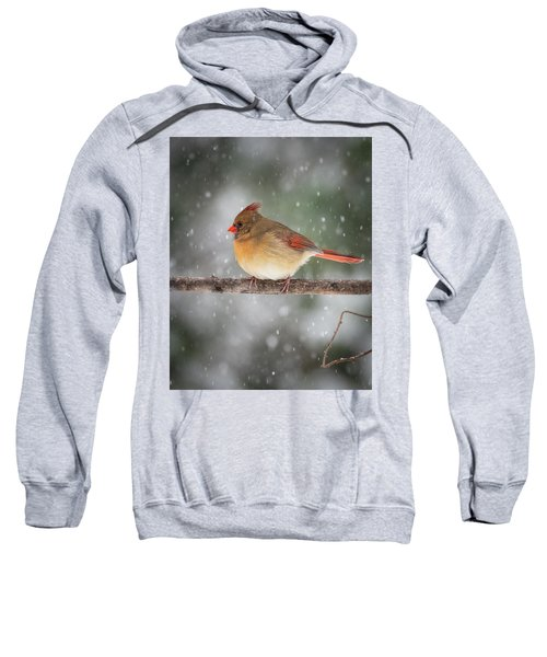 Female Red Cardinal Snowstorm Sweatshirt