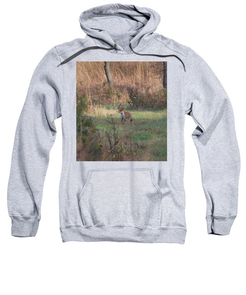 Fox On Prowl Sweatshirt