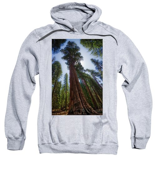 Giant Sequoia Tree Sweatshirt
