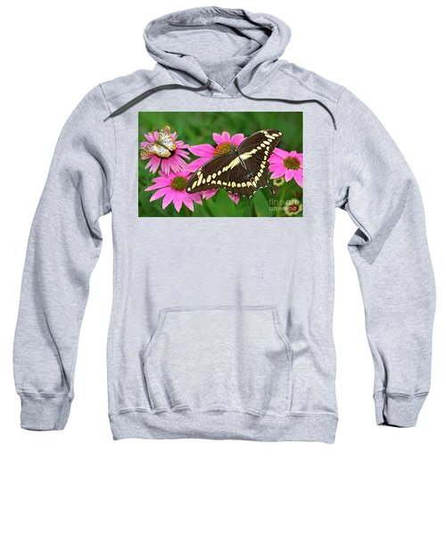 Giant Swallowtail Papilo Cresphontes Sweatshirt