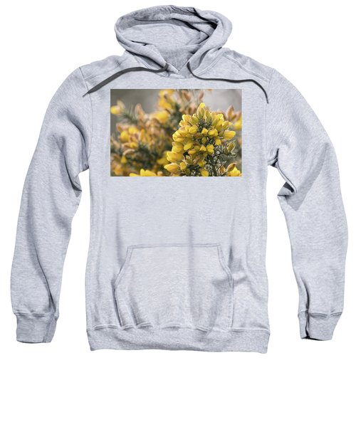 Gorse Sweatshirt