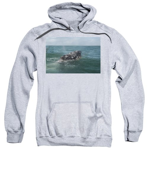 Gray Whale In Bahia Magdalena Sweatshirt