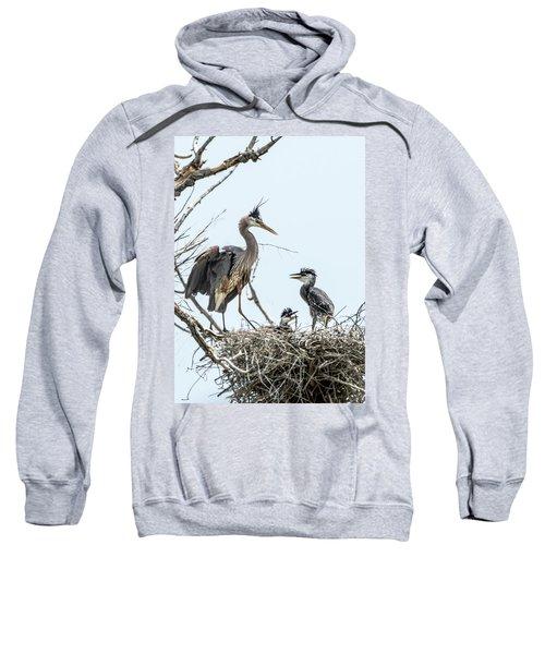 Great Blue Heron Rookery 1 Sweatshirt