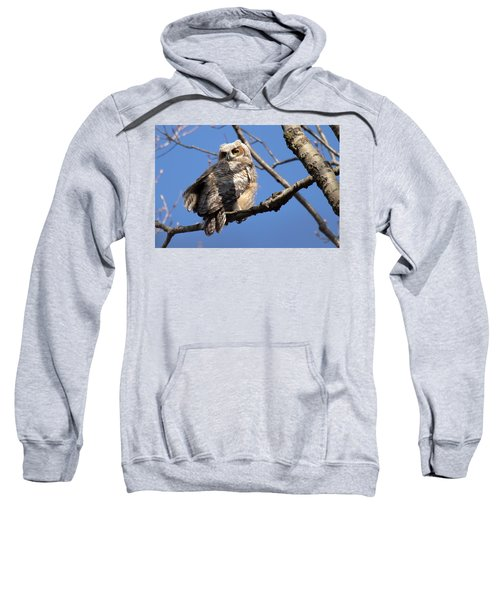 Great Horned Owlet 42915 Sweatshirt