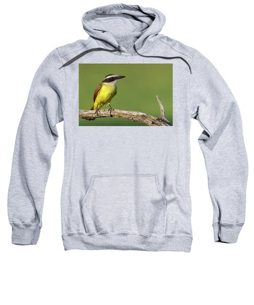 Great Kiskadee Sweatshirt