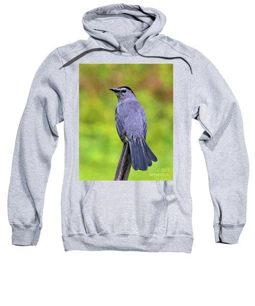 Grey Catbird Sweatshirt