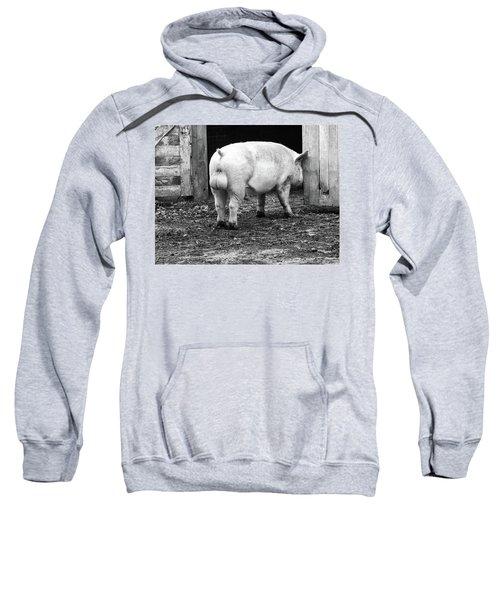 hog Sweatshirt