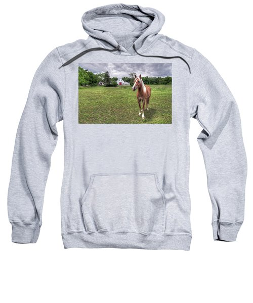 Horse In Pasture Sweatshirt