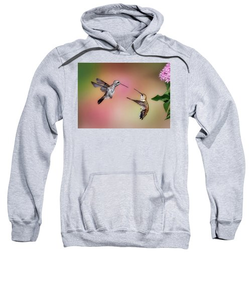 Hummingbird Battle Sweatshirt