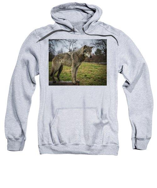 I See It Sweatshirt