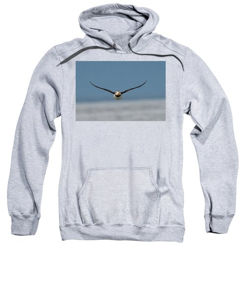 Incoming Puffin Sweatshirt