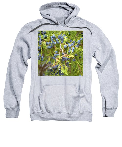 Juniper Berries Sweatshirt