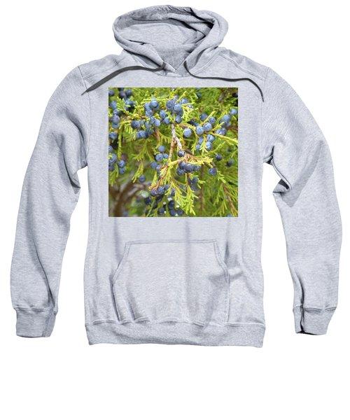 Juniper Berries Sweatshirt