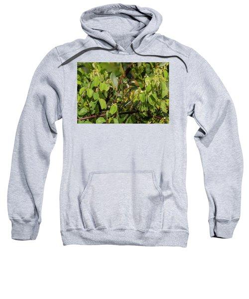 Klaas's Cuckoo Sweatshirt