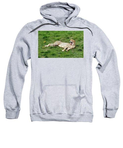 Lounging Cheetah Sweatshirt