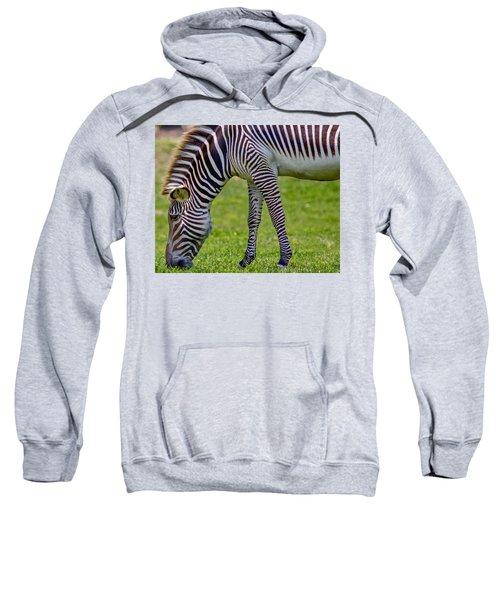 Love Zebras Sweatshirt